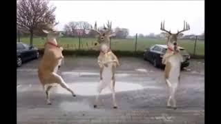 Auguri divertenti Natale - Renne