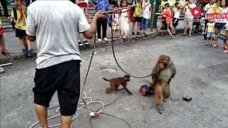 渐渐消失的民间艺人:街头衣衫褴褛的耍猴老人和小猴子一家