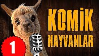 Pisi TV Komik Hayvanlar - Bu hayvanlar Konuşuyor