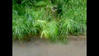 Suara Hujan