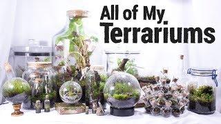 working terrarium tv