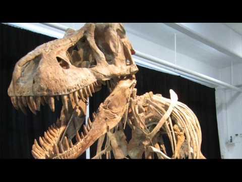 US Government To Seize $1m Mongolian Tyrannosaurus Bataar