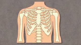 Grolier Knowledge Explorer: Human Body