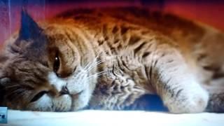 Самые смешные ролики про кошек смотрите наслаждайтесь!!!