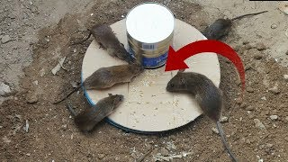 Best Mouse Trap Using Bucket&Can Milk - Deep Hole Mouse/Rat Trap 2019