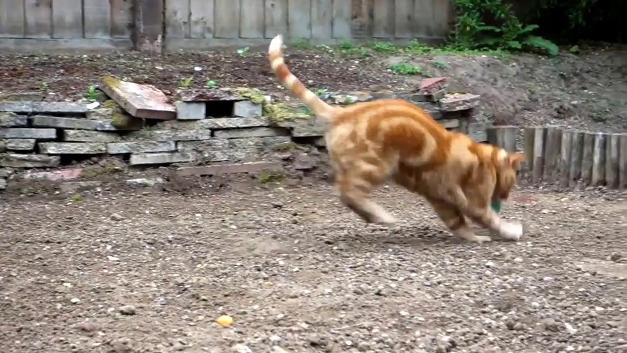 big_ginger video
