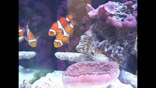 This Video Previously Contained A Copyrighted Audio Track. Due To A Claim By A Copyright Holder, The Audio Track Has Been Muted.     Current Aquapod Coral Reef Nano Aquarium Fish Tank Part 1