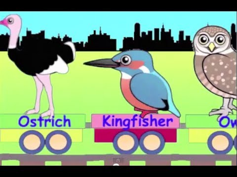 Learn Bird Train - learning for kids