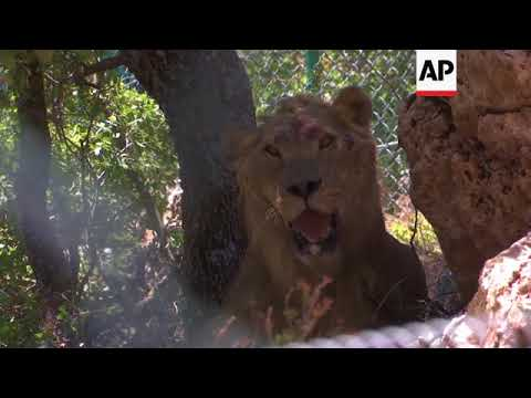 Aleppo zoo animals re-homed in wildlife reserve
