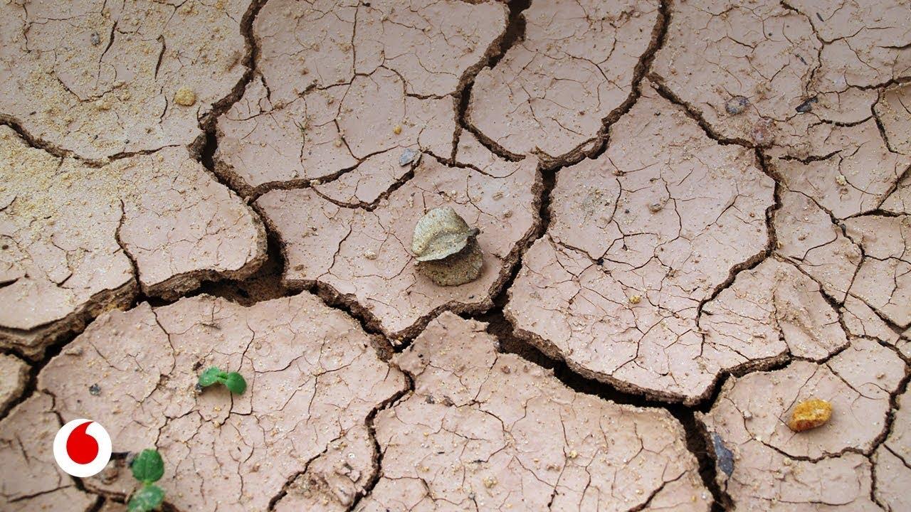 Las cuatro cosas que cada uno debemos hacer para frenar el cambio climático