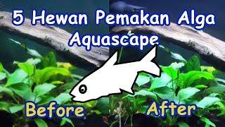 5 Hewan Pemakan Alga Aquascape Berharga Murah