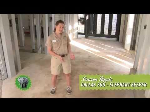 SmartStrand Zoo Challenge: The Carpet