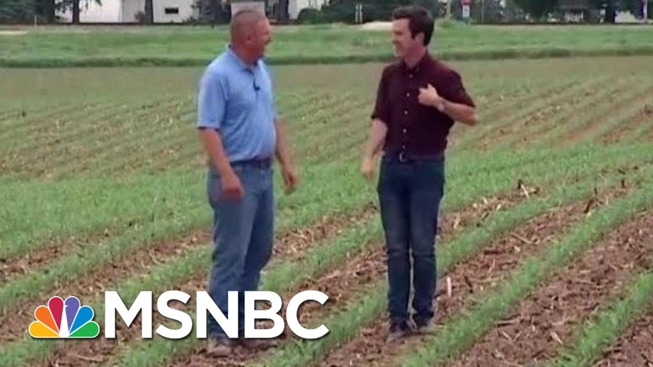 Country Farmers Paying The Price In Growing Trade War | Velshi & Ruhle | MSNBC
