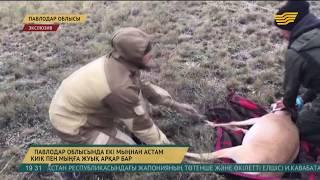 Павлодар облысында киіктерді қорғау жұмысы күшейтілді