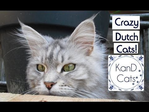 Life of Cats😽 // A Pawesome Sunday!😺 // Dutch Cat Vlog📹 // Maine Coon // KanD Cats😻
