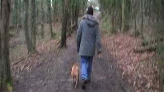 Staffordshire Bull Terrier:out Walking...brilliant Walking On The Lead. Part 9