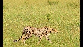 ケニア旅行でマサイマラ国立保護区のサファリを楽しみました。