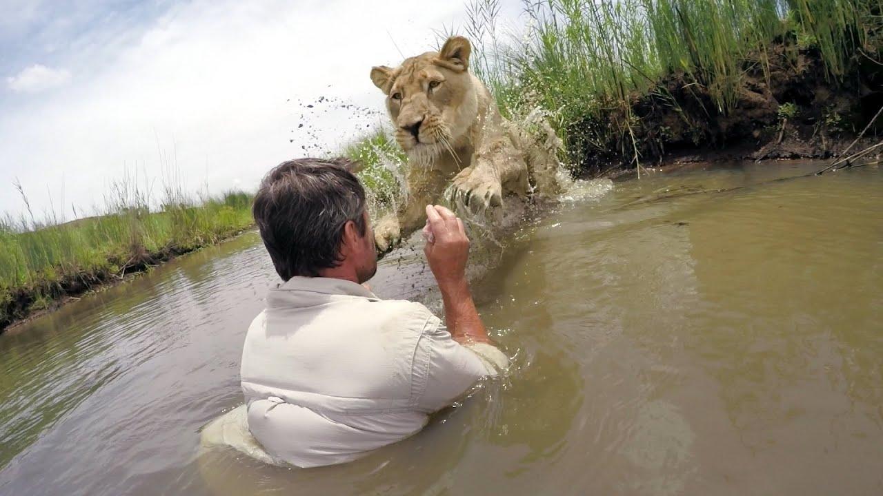 7 ans après avoir sauvé une lionne il la retrouve – La réunion est à couper le souffle!