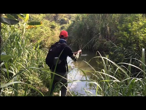Ternyata Di Sungai Kecil Ini Banyak Ikan Hampala!!!