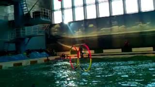 Дельфинарий спб(Это видео загружено с телефона Android., 2013-01-31T15:51:06.000Z)