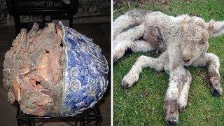 50 сталкерских находок в Зоне Отчуждения Чернобыльской АЭС