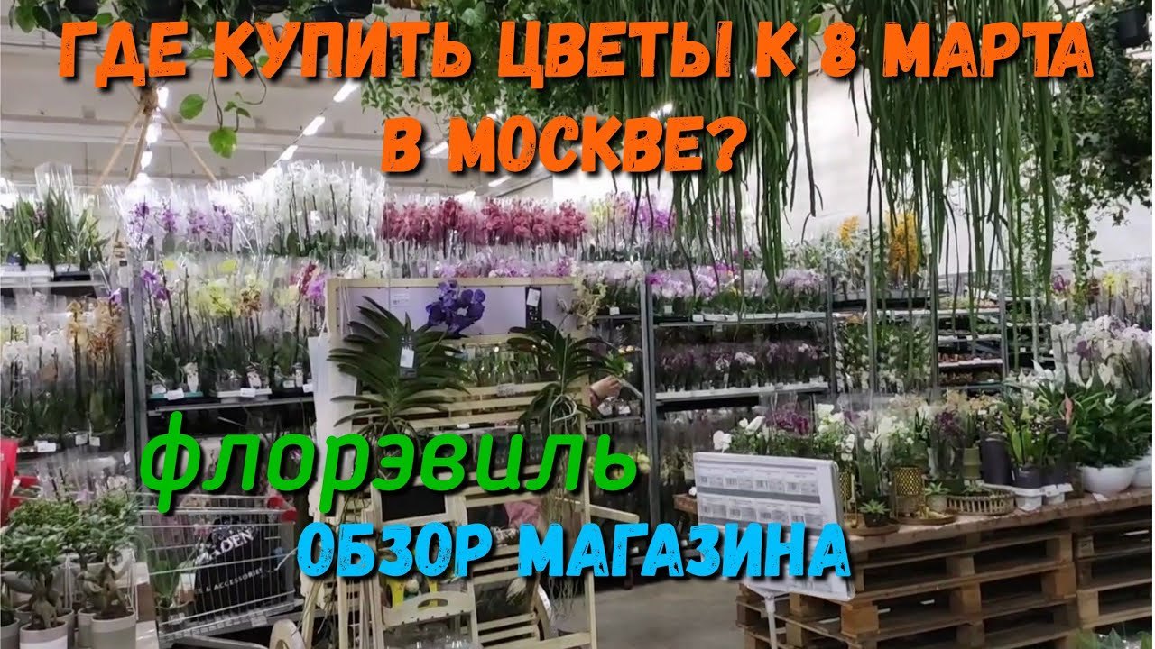 Обзор магазина Флорэвиль Floreville. Орхидеи, срезочные цветы, горшечные растения. Цветы к 8 марта!