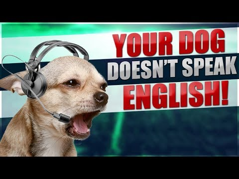 What Dogs ACTUALLY Hear When You Talk To Them!