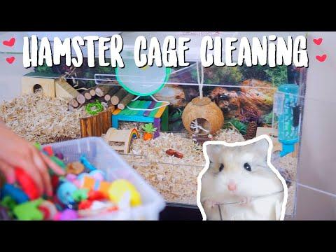 Hamster Cage Cleaning | Roborovski Hamster