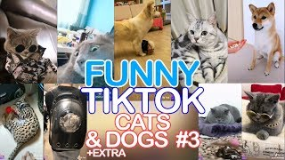 Funny Cats and Dogs - Part 3   Best TikTok