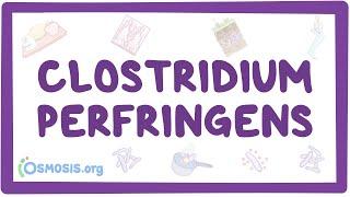 Clostridium Perfringens - Causes, Symptoms, Diagnosis, Treatment, Pathology