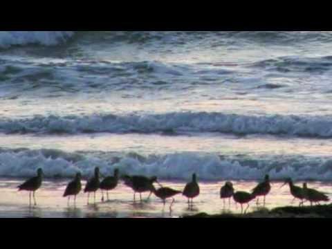 Gulf Coasting Free