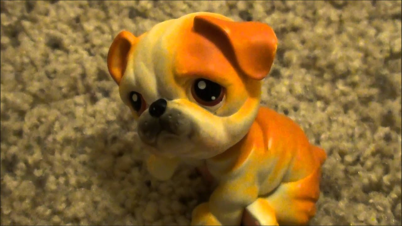 littlest pet shop bulldog my littlest pet shop bulldog collection youtube 5837
