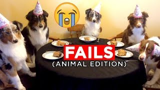 ANIMAL FAILS!! | Candid Fail Videos From IG, FB, Snapchat And More! | Mas Supreme