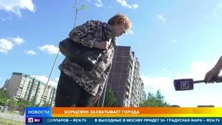 Ядовитый гигант: самое опасное растение захватывает города России