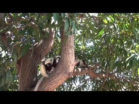 Madagascar - Les Alentours de Majunga