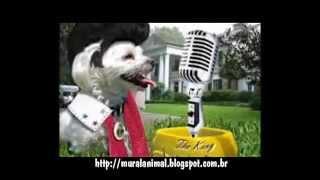 Pets Dancing Costumes Elvis Presley