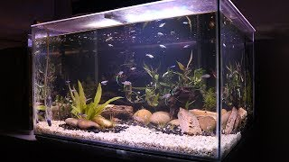 Natural Aquascaped Aquarium *Step by Step TIMELAPSE* | TonyTanks