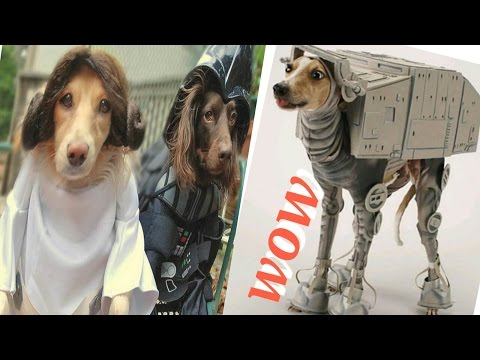 The Cutest Pets Dressed as Star Wars Characters