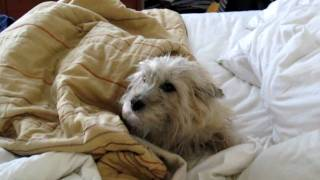 The Cairn Terrier Chronicles - Our Little Pavlov, The Sleepiest Dog Ever.
