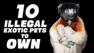 The 10 ILLEGAL Exotic Pets