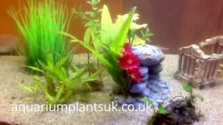Easy Aquarium Plants For Beginners How To Care For Planted Live Aquatic Plants