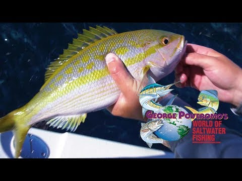 2019 SEASON - Episode 12 , Islamorada, FL Keys - 4K