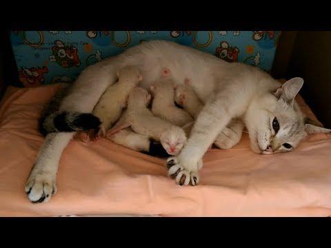 Вопрос: Бывает ли кошкам лень?