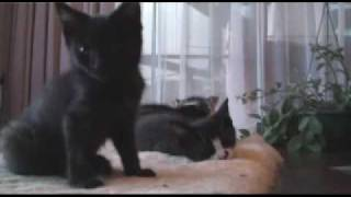 Abused kittens recovering
