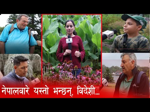 नेपालवारे के भन्छन् विदेशी ?  How Foreigners React About Nepal