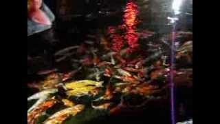 Phuket FantaSea шоу Слонов,вид при входе(Хорошее шоу ,само представление снимать нельзя ,фото ,видео ,телефоны все сдаешь , охрана проверяет металлод..., 2013-09-24T10:38:20.000Z)