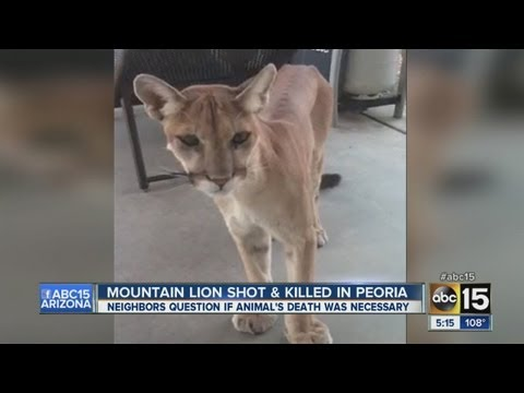 Mountain lion shot and killed in Peoria