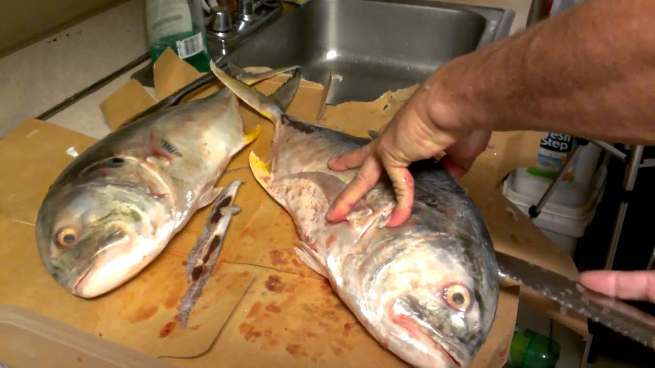 Clean filleting jack fish haciendo filete pescado youtube for What is a jack fish