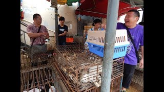 Recherche & Katzenrettung auf einem Tiermarkt in China