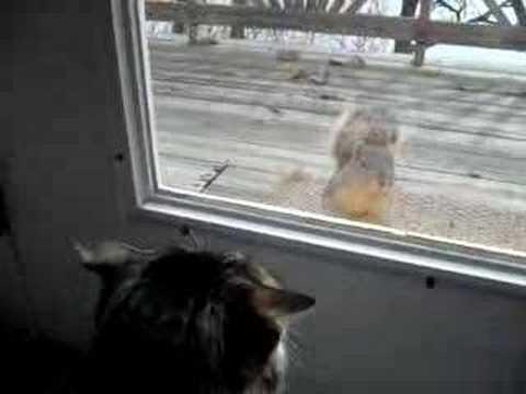 Cat Wants Squirrel as Friend